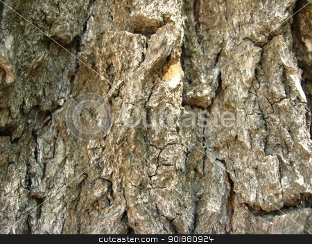 Dark bark of a tree stock photo, Background from a bark of a tree by Alexander Matvienko