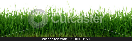 Green Grass 67 Megapixel Panorama Seamless Tile Tiling Repeating Isolated stock photo, Very Long 67 Megapixel High Width Panorama Of Green Grass Close Up That Seamlessly Tiles Horizontally Isolated On White by Matt Jones