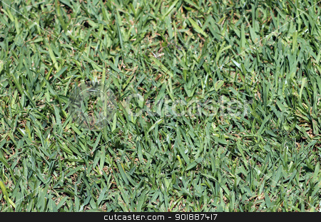 Green grass background stock photo, Abstract background of lush green grass. by Martin Crowdy