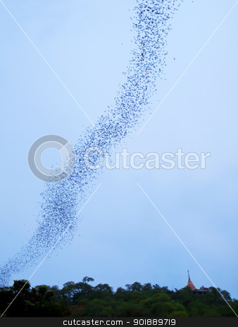 Bats stock photo, Bats flying from the cave in forest on mountain in evening, Thailand by Exsodus