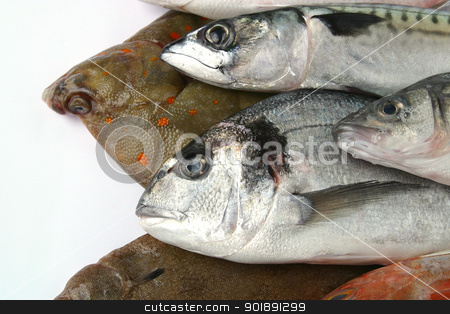 Various fish stock photo, Various fish by photography33