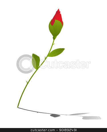 Young rose stock vector clipart, Young red rose and reflection over white background by Richard Laschon