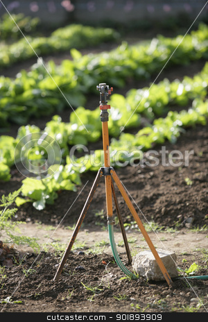 Irrigation system on vineyard stock photo, Irrigation system on vineyard by photography33
