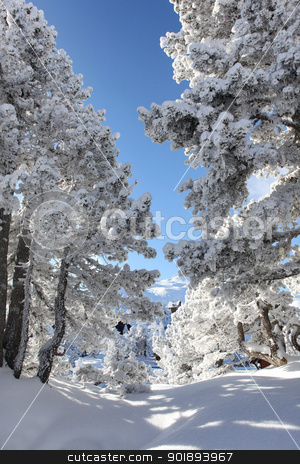 Snow covered rural path