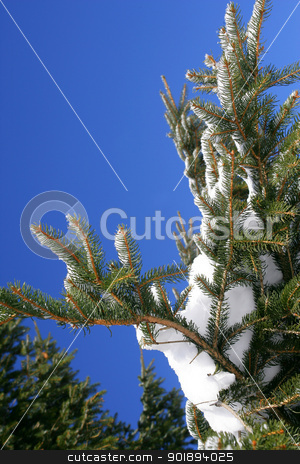 Snow on a tree stock photo, Snow on a tree by photography33
