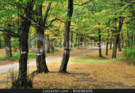 Road in autumn forest stock photo, Empty country road through trees in early autumn forest by zagart
