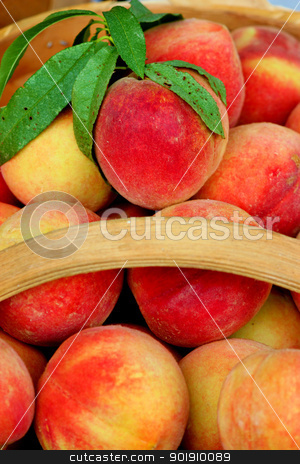 Basket of peaches  stock photo, Close up of a basket of fresh, ripe peaches by Cathy Locklear