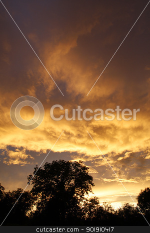 Silhouetted trees at sunset stock photo, Silhouetted trees against a cloudy sunset sky by steve ball