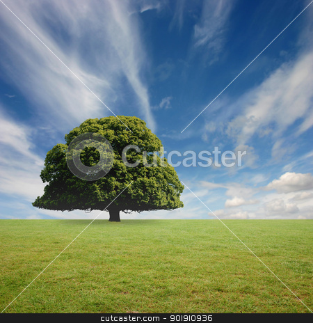 Lone Tree stock photo, A Lone Tree with Blue Sky and Grass by Binkski Art