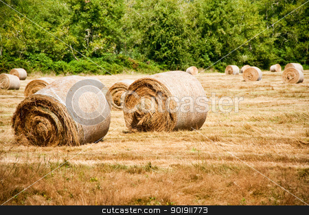 Hay bales stock photo, Bales of hay in a field by Jaime Pharr