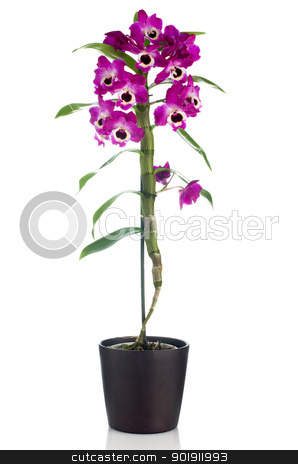 Beautiful pink orchid in a flowerpot stock photo, Pink orchid in a white flowerpot on dark background. by Homydesign