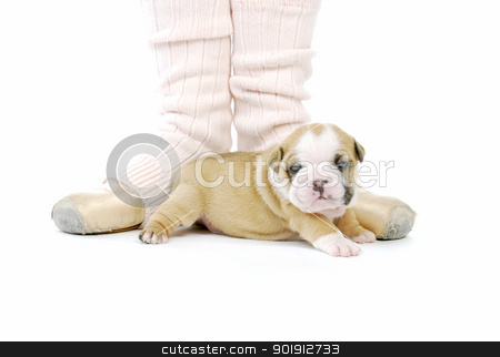 puppy and ballerina stock photo, ballerina and newborn puppy - english bulldog puppy - 4 weeks old by John McAllister