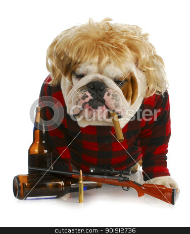 red-neck dog stock photo, redneck dog - english bulldog redneck smoking cigar and sitting beside gun and beer bottles  by John McAllister