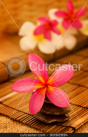 Tropical spa with Frangipani flowers. stock photo, Tropical spa with Frangipani flowers in low lighting, suitable for spa related theme. by szefei