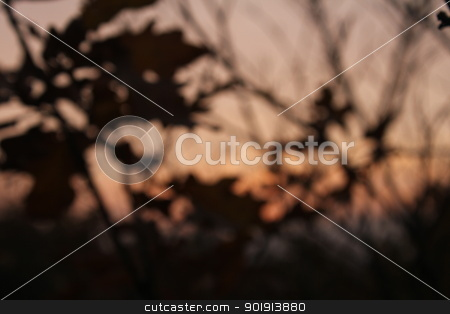 evening blur stock photo, evening blur by Tobias Arhelger