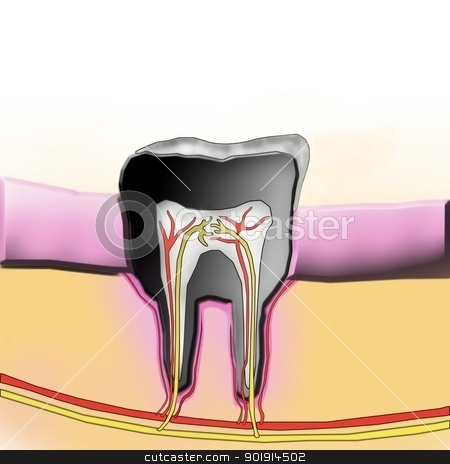 dental cross-section illustration stock photo, dental cross-section illustration by Tobias Arhelger