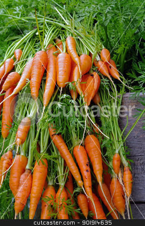Fresh Carrots  stock photo, Fresh picked carrots from a raised bed in an urban garden  by Ed Corey