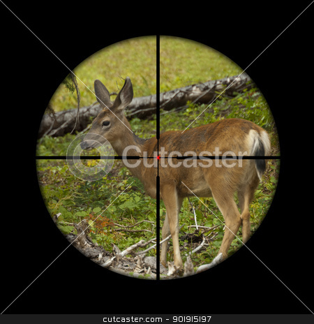 Roe deer in crosshairs stock photo, Young roe deer calf being targeted by a hunter with the crosshairs of the scope on his rifle by Corepics VOF