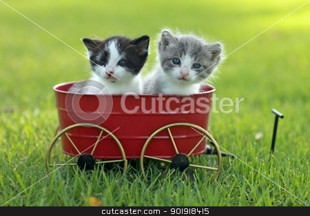 Kittens Outdoors in Natural Light stock photo, Cute Little Kittens Outdoors in Natural Light by Katrina Brown