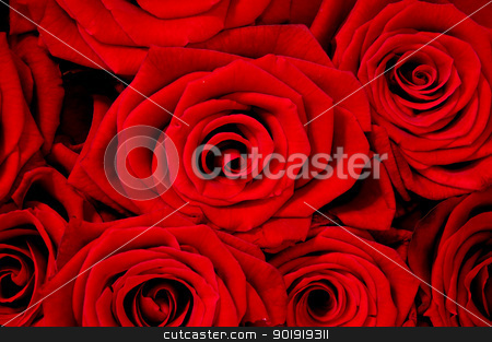 Rose background - rose flower stock photo, A lot of red roses. - rose flower by Lars Christensen