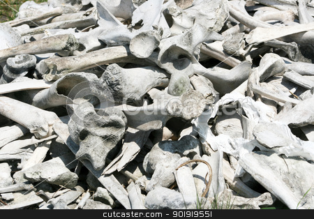 Bison and Deer Bones stock photo, A pile of old Bison and White Tailed Deer bones in spring in Winnipeg, Manitoba, Canada by Robert Hamm