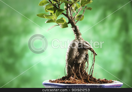bonsai stock photo, close up of the bonsai  with background by eskaylim