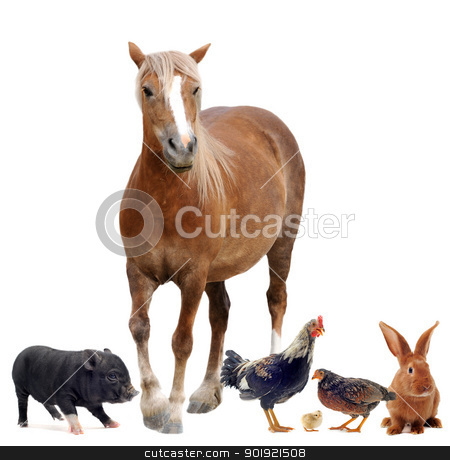 farm animals stock photo, group of farm animals in front of white background by Bonzami Emmanuelle