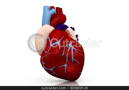 Human heart 	 stock photo, Human heart 	 by dileep