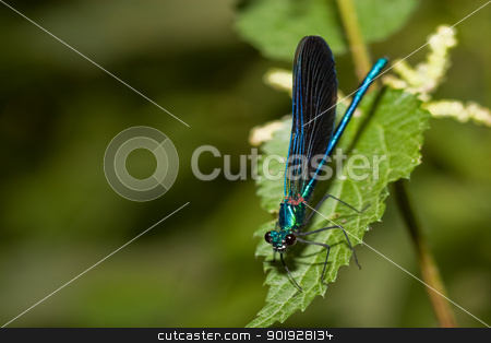 Dragonfly, Canyon of the river wolves, Soria, Spain stock photo, Dragonfly, Canyon of the river wolves, Soria, Spain by B.F.