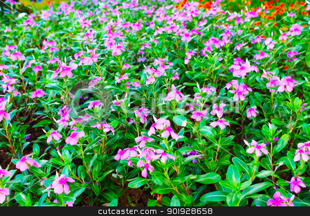 Beautiful pink flowers  stock photo, Beautiful pink flowers in the park by dinhngochung