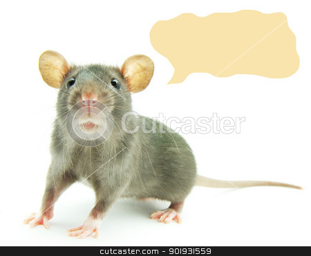 rat   stock photo, funny rat  isolated on white background by Vitaliy Pakhnyushchyy
