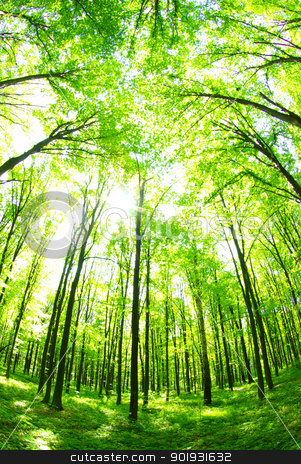 green forest  stock photo, green forest  background in a sunny day by Vitaliy Pakhnyushchyy