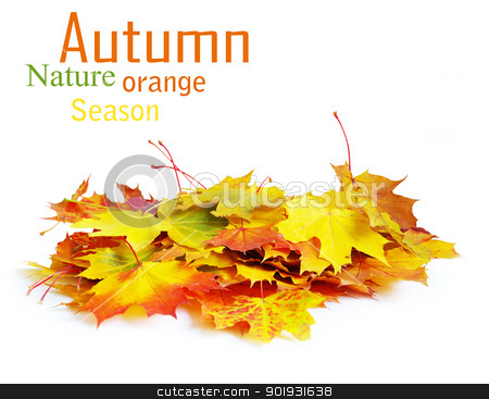 autumn maple leafs  stock photo, autumn maple leafs isolated on a white  by Vitaliy Pakhnyushchyy