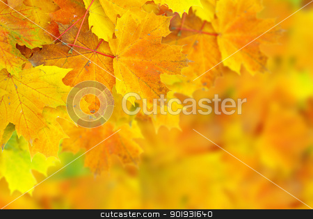 autumn leafs stock photo, autumn maple leaves with selective focus by Vitaliy Pakhnyushchyy