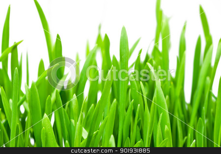 Spring grass close up stock photo, Fresh spring grass on white isolated background, macro by Alexey Popov