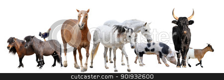 farm animals stock photo, farm animals in front of white background by Bonzami Emmanuelle