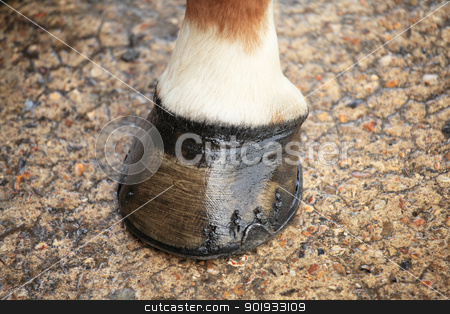 horse hoof stock photo, horse hoof by Chretien