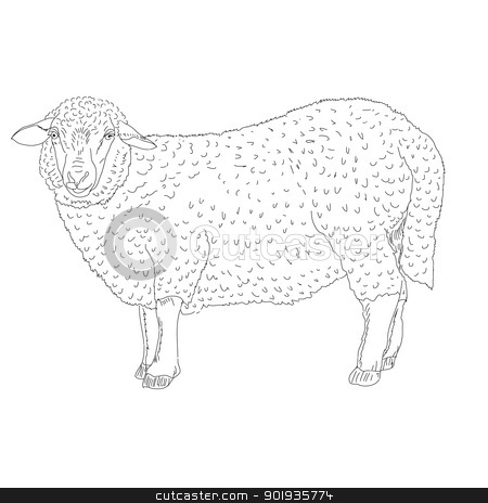sheep painted by hand  stock photo, sheep painted by hand vector illustration by aarrows