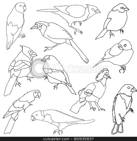 Vector set of different species of birds. stock photo, Vector set of different species of birds. by aarrows