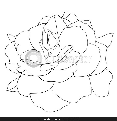 floral design element and hand-drawn ,  illustration