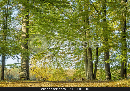 autumn trees stock photo, An image of a nice autumn trees background by Markus Gann
