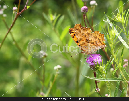 butterfly on pink flower on green leaf