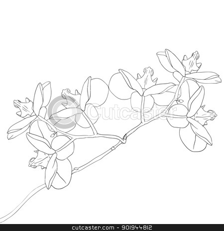 Vector illustration of orchid flower  stock vector clipart, Vector illustration of orchid flower on white background by aarrows