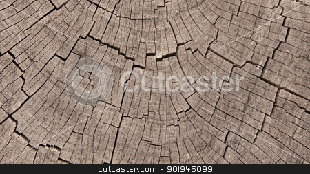Crosssection of Exposed Tree Trunk Rings stock photo, Crossection of weathered and worn tree rings by Shane Morris