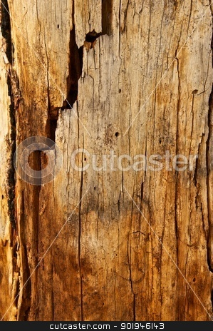 Tree Trunk With Cracks and Holes stock photo, Tree trunk with many cracks and marks in it by Shane Morris