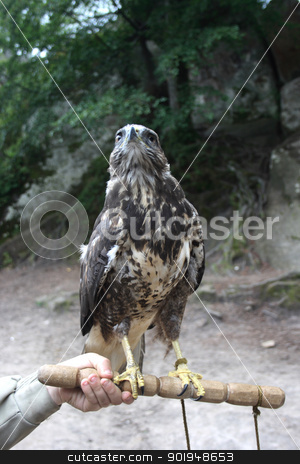 falcon  stock photo, on stick falcon by Oleksandr Pakhay