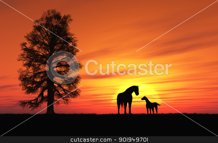Horse stock photo, This image shows an idyllic sunset with horse and foal by kirschner