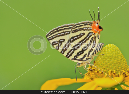 butterfly macro stock photo,  butterfly macro by Viewphoto