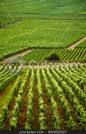 Vineyards in Gevrey chambertin burgundy France stock photo, Vineyards in Gevrey chambertin burgundy France by Christophe Rolland