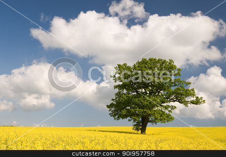 Rape with green tree stock photo, Green tree in yellow field of rape by Picturehunter
